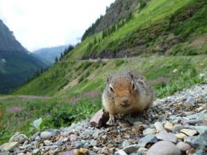 friendly wildlife